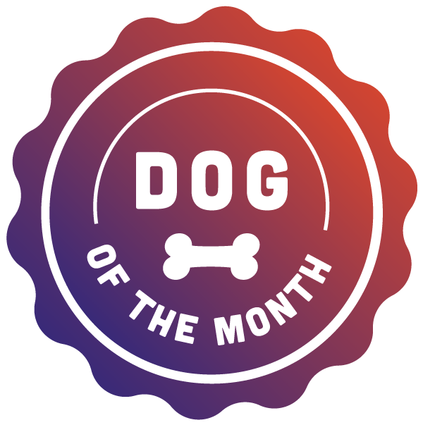 Dog of the Month